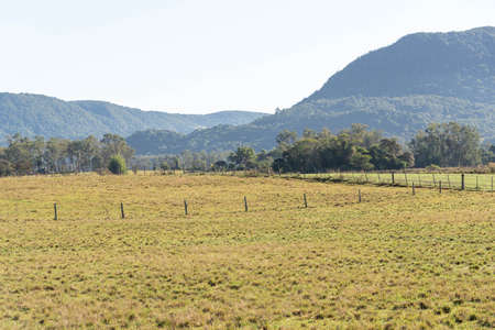 Livestock fields in Brazil. Brazil has one of the largest cattle herds in the world. Anonne grass. Pasture for cattle raised in extensive production area. Stock Photo