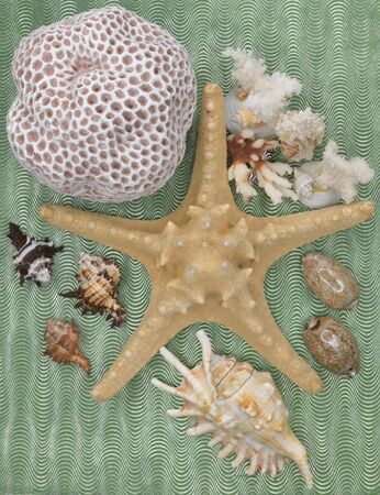 starfish on a green background with shells and corals
