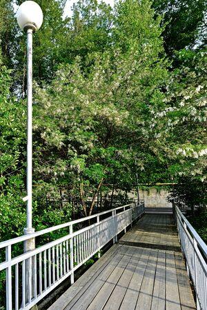 wooden bridge with metal railing among the vegetation