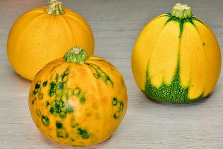 three multi-colored pumpkins on a light wooden surface Reklamní fotografie