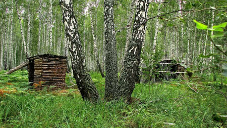 A camouflaged fortification made of natural materials in a forest thicket among trees and thickets of grass