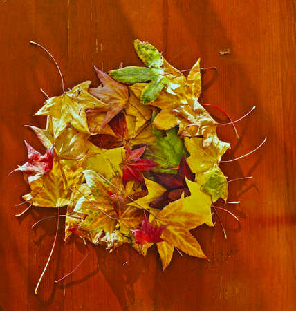 Multi-colored fallen leaves of a tree laid out in a dense circle located on a wooden surface