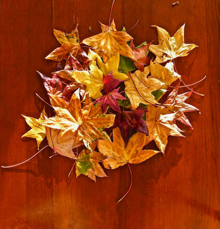 fallen colorful foliage of a tree located in a filled circle on a wooden surface Standard-Bild