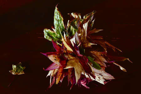 Still life of a bouquet, standing on the table, from multi-colored fallen leaves close-up