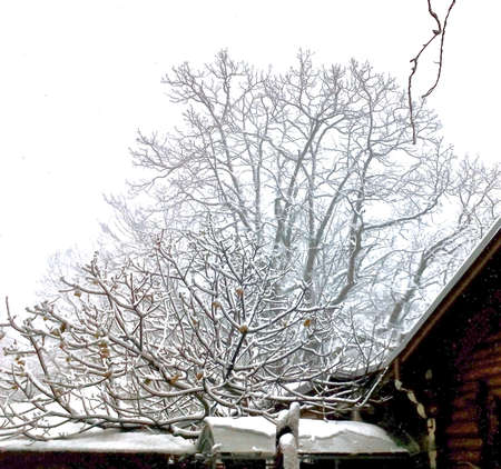Top view of the roof of a small wooden house covered with snow in the forest