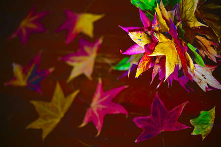 still life of colorful bright fallen leaves with a bouquet of them and a scattering around