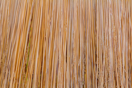 straw texture of the roof background for design