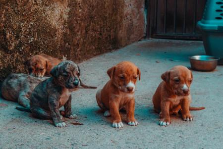 Guanajuato, Gto, MEX - August 2017: doggys in the street Sajtókép