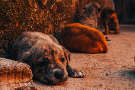 Guanajuato, Gto, MEX - August 2017: doggys in the street Imagens - 85670860