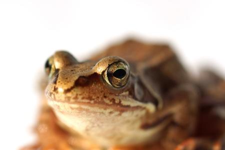 frog closeup photo