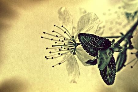 Vintage bloem