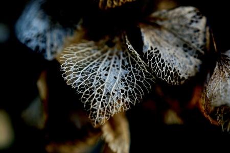 Leaf in winter Standard-Bild