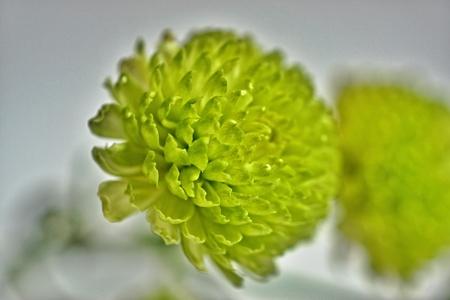 Flower bright green