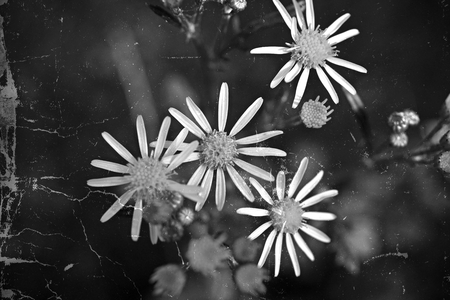 Vintage flowers Standard-Bild