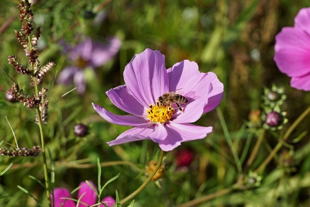 insect meadow Standard-Bild