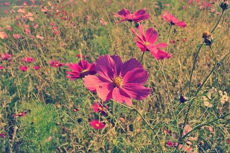 flower meadow retro