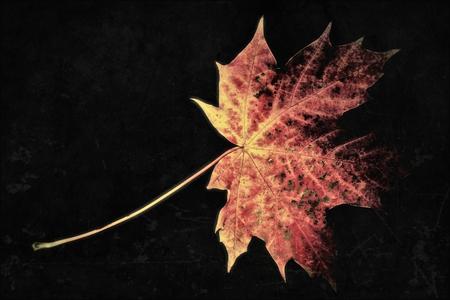 Leaf in the autumn Standard-Bild