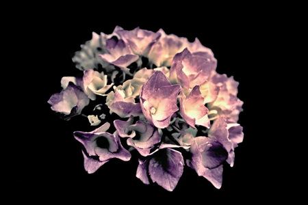 retro flower Standard-Bild