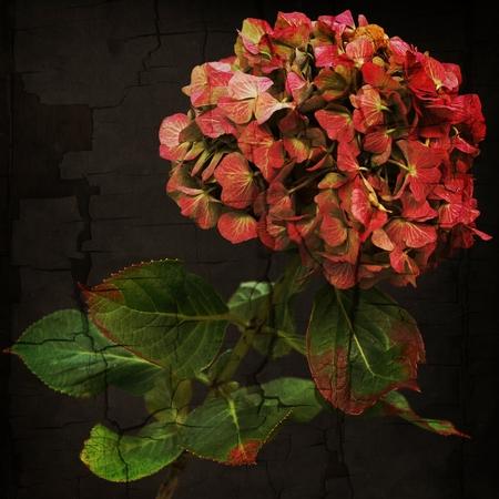 Splendid red flower isolated on black