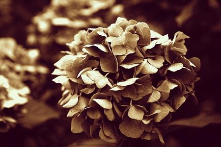 flower vintage Standard-Bild