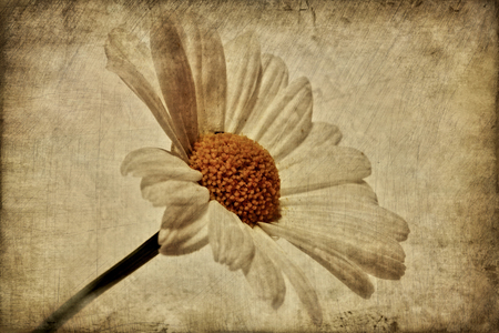 garden mood Standard-Bild