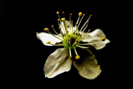 close up of white blossom flower Standard-Bild