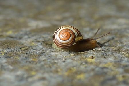 Mini snail on stone Standard-Bild - 99872016