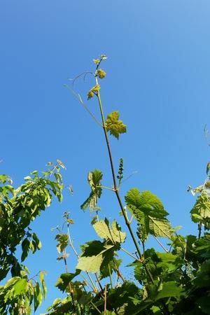 Spring of plant on sunny day Standard-Bild - 101997633