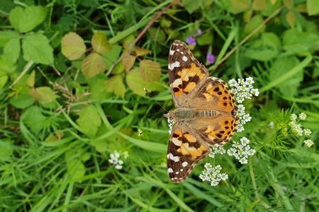 free butterfly Standard-Bild - 106637599