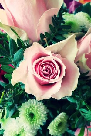 Bunch of roses close-up Standard-Bild - 116295715