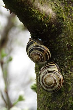 Snails on a tree Standard-Bild - 116295776