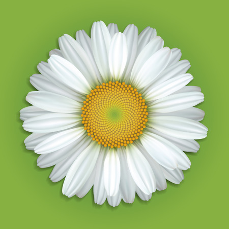 Flower white daisies on a green background Stock Illustratie