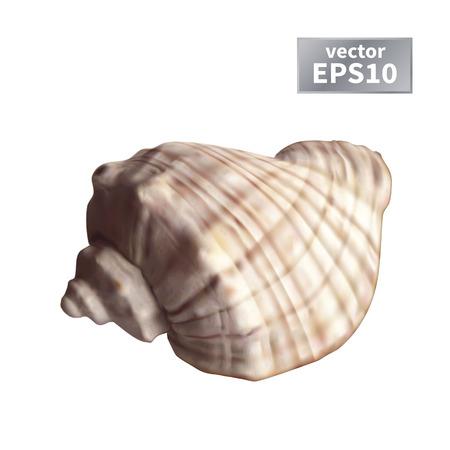 現実的な海のシェル。白い背景上に分離。ベクトル図  イラスト・ベクター素材