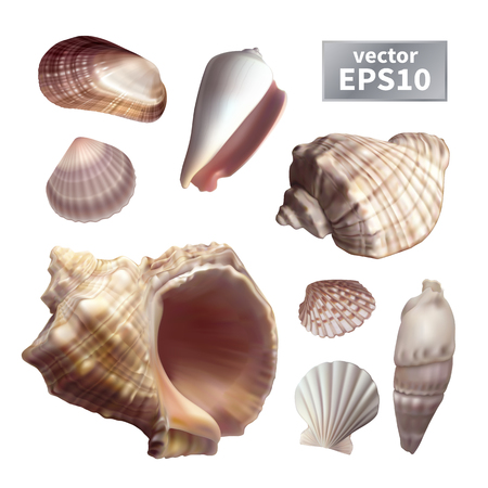 Set of realistic different shapes seashells. Isolated on a white background. Vector illustration