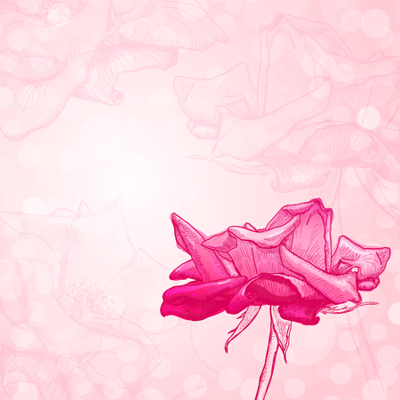 Hand drawn beautiful flower of pink rose on a pink background.