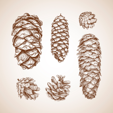 Set of different cones. Fir tree, cedar, pine. Hand drawn sketch. Vector illustration