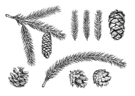 다른 원뿔 및 크리스마스 트리 분기의 집합입니다. 전나무 나무, 삼나무, 소나무. 손으로 그린 스케치 벡터 일러스트 레이 션.