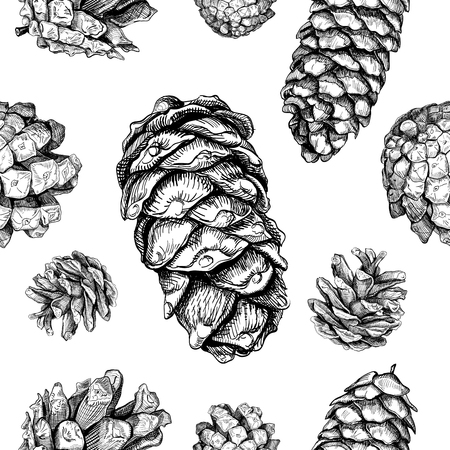 Seamless pattern with cones. Fir tree, cedar, pine. Hand drawn sketch. Vector illustration Ilustrace