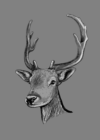 회색 배경에 고립 된 뿔을 가진 젊은 사슴의 머리의 스케치. 벡터 일러스트 레이 션.