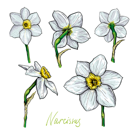 수 선화의 다른 꽃의 집합입니다. 손으로 그린 스케치입니다. 플로랄 디자인을위한 템플릿 일러스트