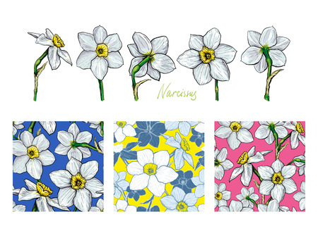 Set of flowers Narcissus with three different seamless patterns. Hand drawn sketch. Template for textile floral design