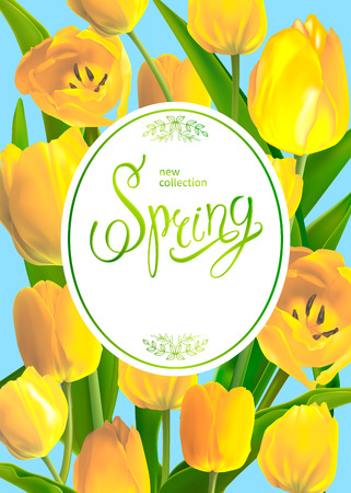 Beautiful Spring background with yellow tulips. Template for greeting card and banners on 8 March, Mother s Day, Birthday, Spring Sale. Vector illustration, EPS10 format. Stok Fotoğraf - 93137213