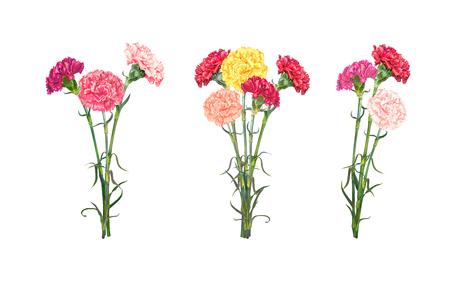 Zestaw trzech bukietów kolorowych realistycznych goździków na białym tle. Ilustracja wektorowa, format Eps10.