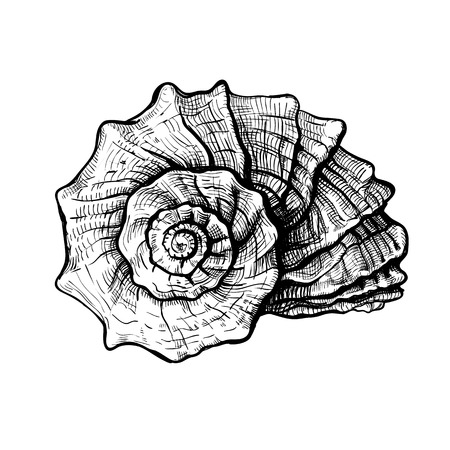 Handdrawn sketch of a seashell isolated on a white background Stock fotó - 102034003
