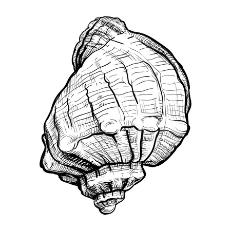Handdrawn sketch of a seashell isolated on a white background