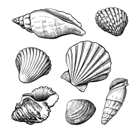 Zbiór różnych kształtów muszelek na białym tle na białym tle. Ręcznie rysowane szkic. Ilustracji wektorowych