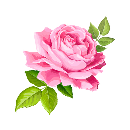 Beautiful flower of pink rose with leaves isolated on a white background. Lovely floral design element. Vector illustration Stock fotó - 113119152