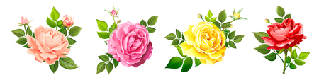 Set of four beautiful flower of  blooming rose different colors with leaves and buds isolated on a white background. Lovely floral vintage design element. Vector illustration in watercolor style
