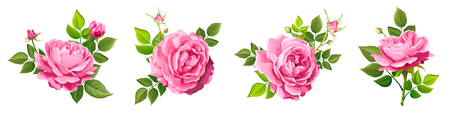Set of four beautiful flower of pink blooming rose with leaves and buds isolated on a white background. Lovely floral design element. Vector illustration