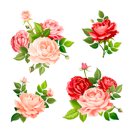 Set of beautiful bouquets flowers of red, pink and gentle peach blooming roses with leaves and buds, isolated on a white background. Floral design elements. Vector illustration in watercolor style